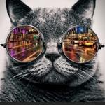 Cool catさん